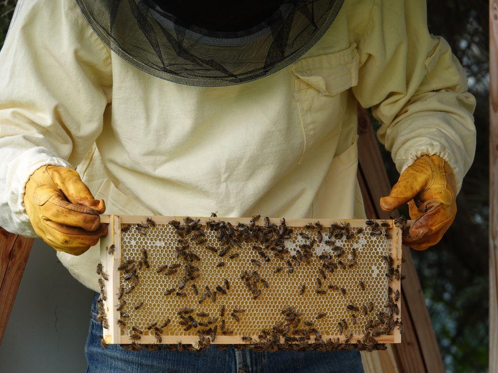 Ein Imker hält einen Wabenrahmen, auf dem zahlreiche Bienen sitzen.