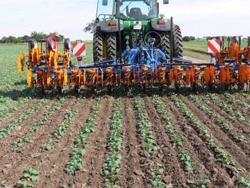 Traktor mit Hacke auf Rapsfeld