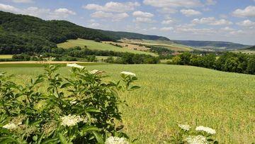 Landschaft mit Feldern, Wiesen, Wald und Feldgehölzen