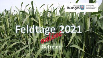 Hinweis auf den Feldtag Getreide mit einem Foto von Weizenpflanzen