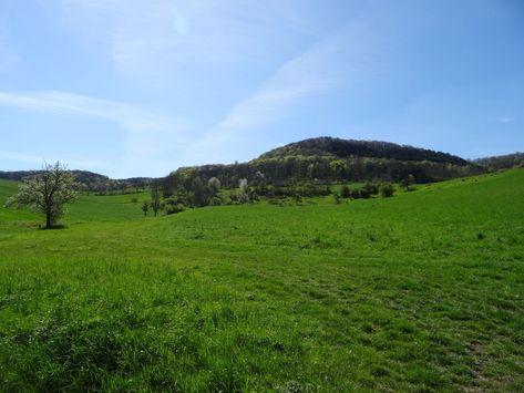 Grünland im Frühjahr