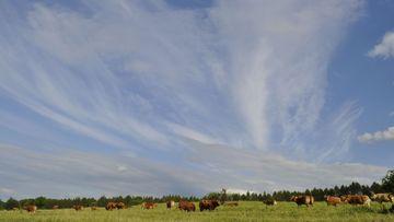 Himmel mit Wolkenmuster über Rinderweide