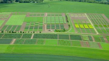 Luftbild der Versuchsparzellen in Dornburg