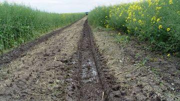 Eingesenkte Traktorfahrspur auf feuchtem Boden