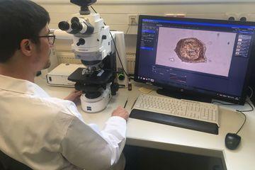 Untersuchung im Labor