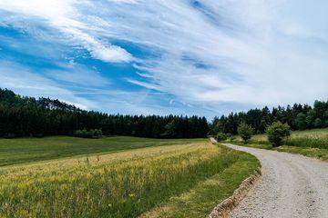 zu sehen ist ein Wanderweg, der entlang einer Wiese in einen Wald führt