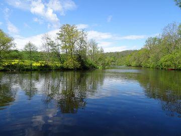 Saale mit bewaldetem Ufer, ein Rapsfeld im Hintergrund
