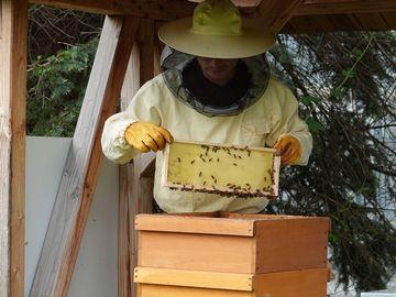 Imker mit Beute an einem Bienenstand.