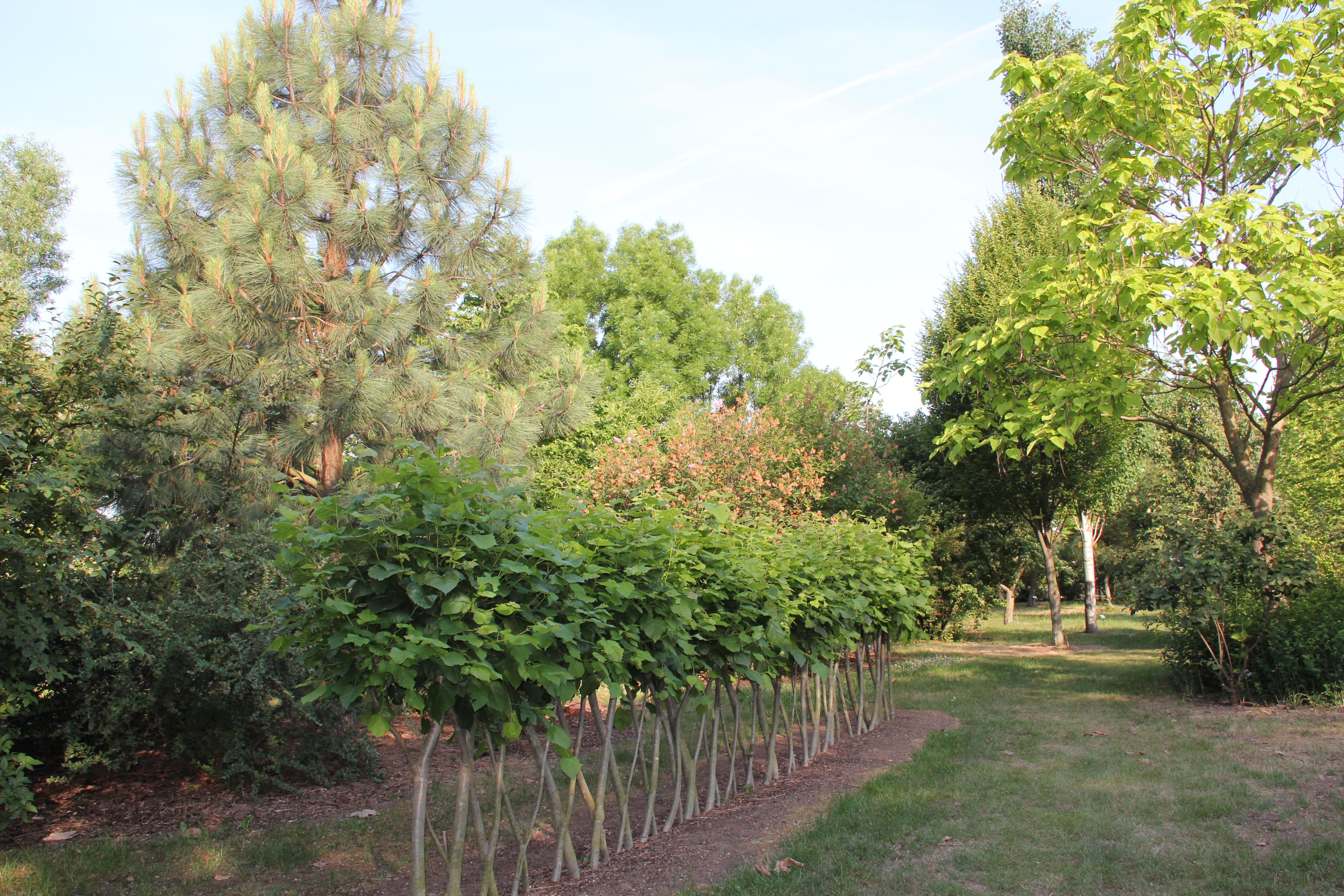 Gelände Arboretum des LVG