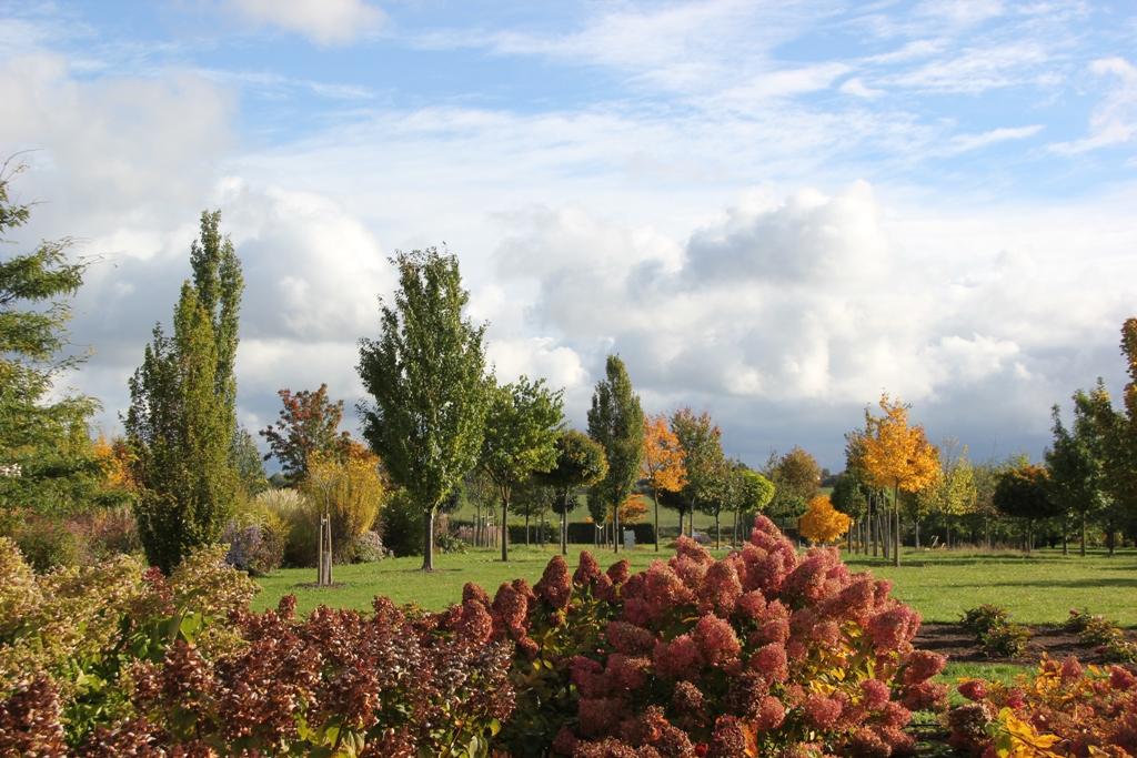 Blick auf Versuchsanlage kleinronige Hausbäume in Herbstfärbung
