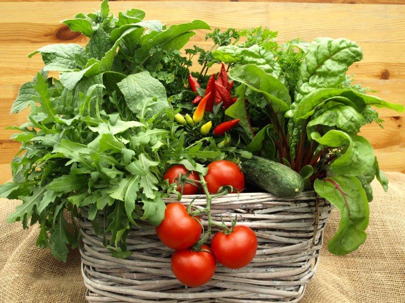 ein Korb voll Kräuter, Salat und Tomaten