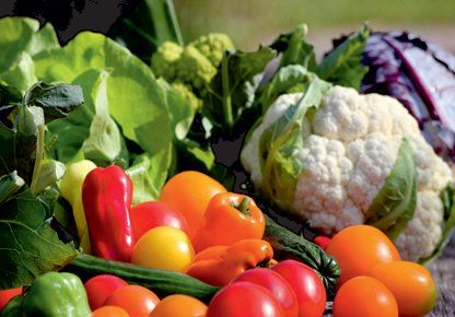 viele verschiedene Gemüsesorten arrangiert