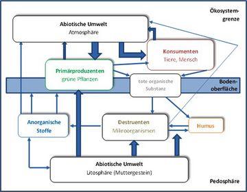 Schema eines Ökosystems