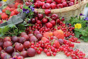 Nahaufnahme verschiedener nebeneinander arrangierter roter Früchte, wie Erdberren, Kirschen, Johannisbeeren oder Stachelbeeren