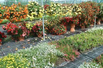 Blumen Gartenbau