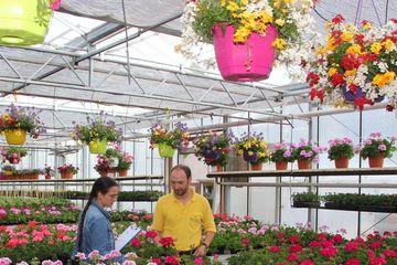 Zierpflanzenprüfung im Gewächshaus mit Geraniern