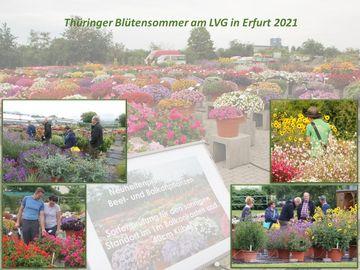 Impressionen vom Zierpflanzentag 2021