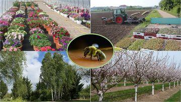 Symbolbild für die Themen des Gartenbaus: Blumen, Bäume, Insekten, Obst, Gemüse