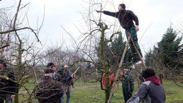 Fachschüler beim Obstbaumschnitt