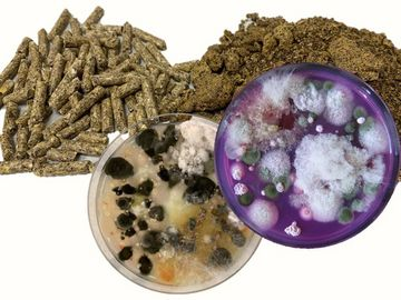 Futtermittelmikrobiologie